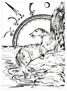 coloring adult otter