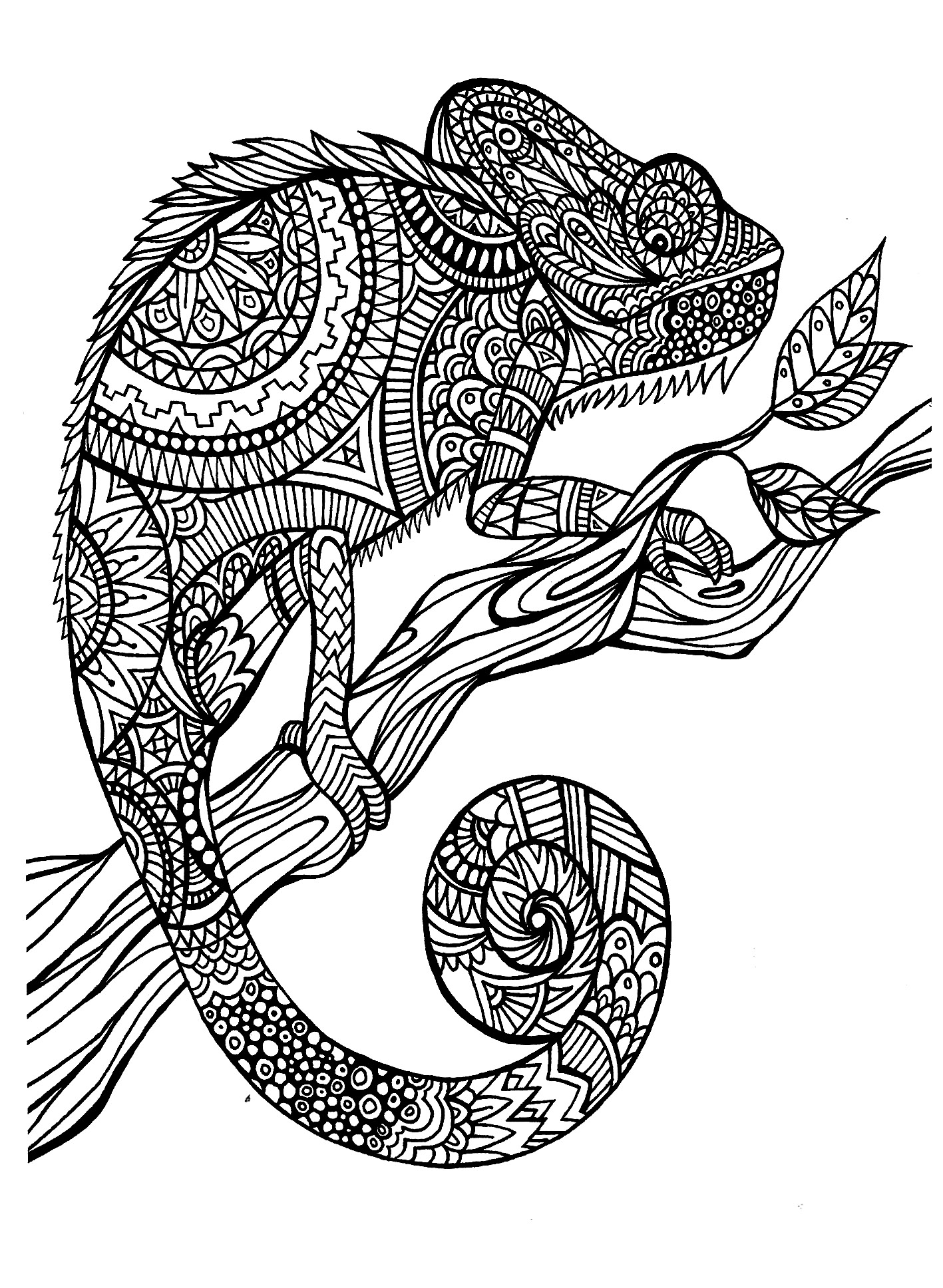 animals coloring pages for adults coloringadult