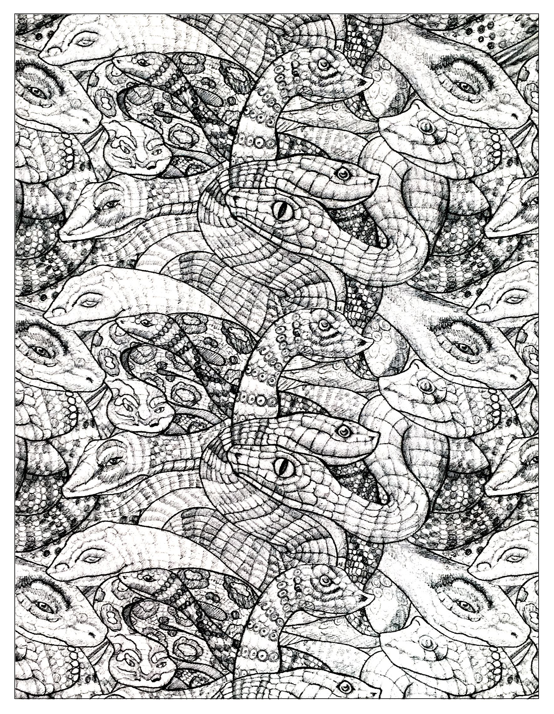 Animals coloring pages for adults coloring adult for Coloring page of a snake