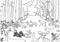 coloring-adult-does-and-fawns-in-forest-by-marion-c free to print