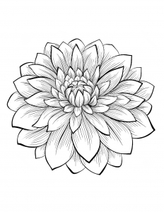 coloring-adult-dahlia-flower free to print