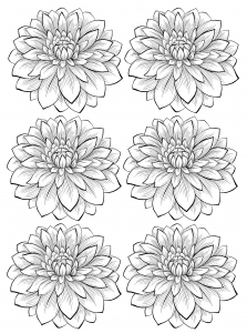 coloring-adult-six-dahlia-flower free to print