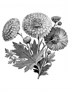 coloring-adult-vintage-flower-garden-clip-art-black-and-white free to print