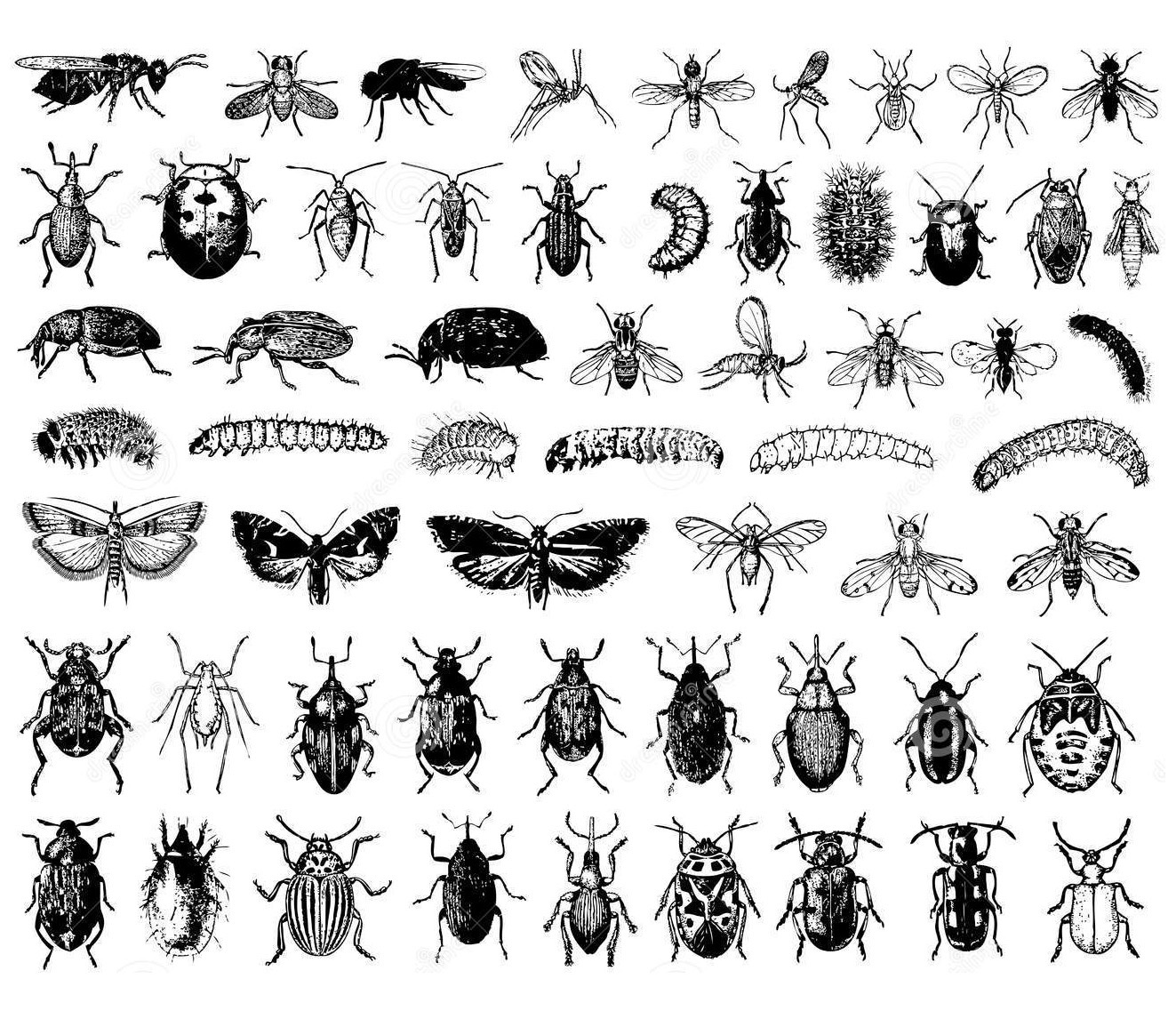Insects Coloring pages for adults coloring difficult