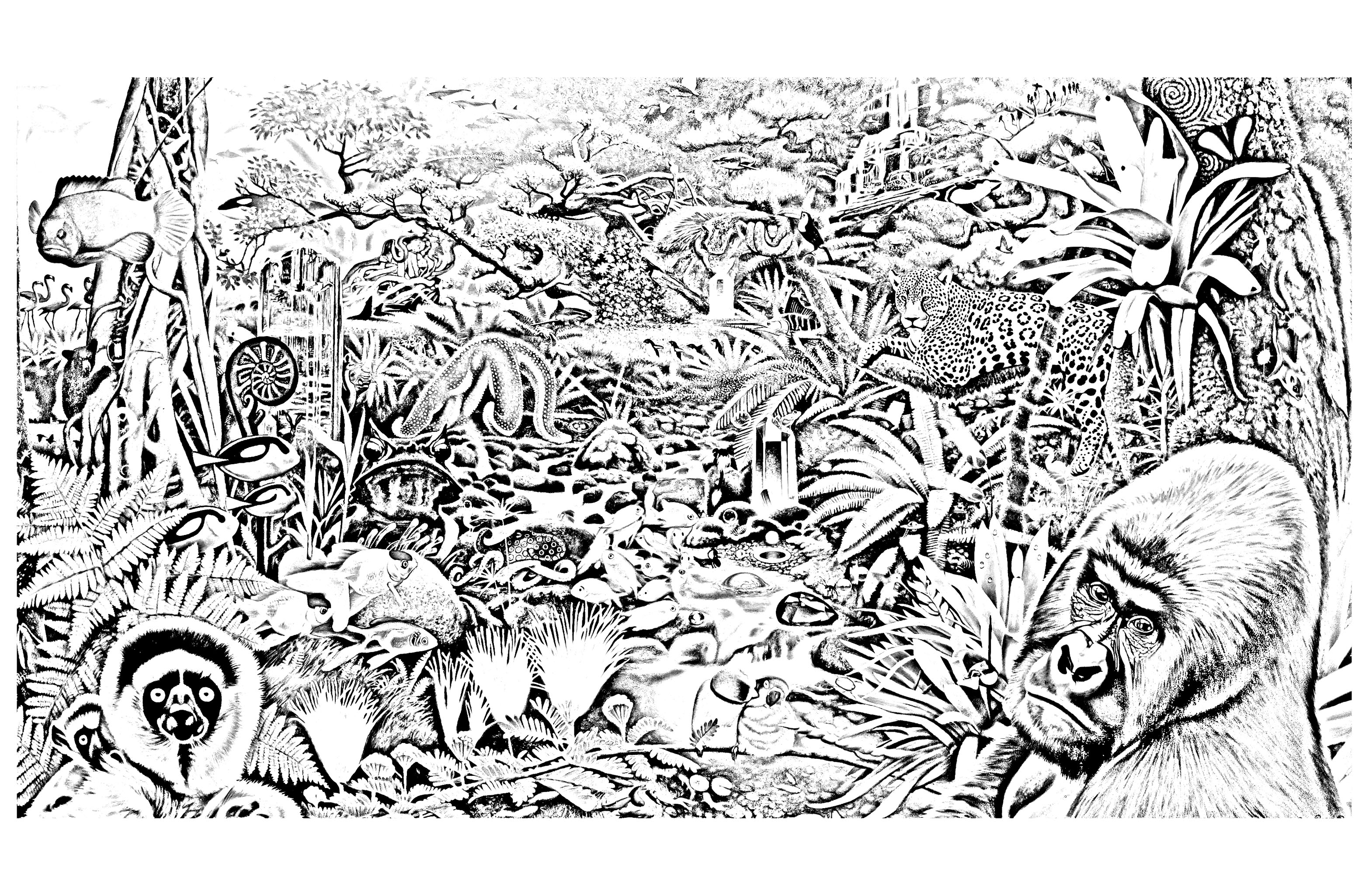 jungle animals coloring page 28 images jungle animals coloring