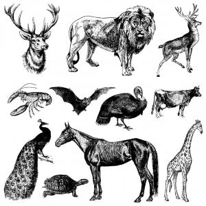 coloring-representation-vintage-animals free to print