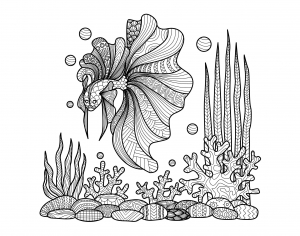 coloring-adult-zentangle-fish-on-corals-by-bimdeedee free to print