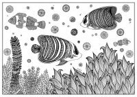 coloring-page-adults-fish-zentnagle-sabrina free to print